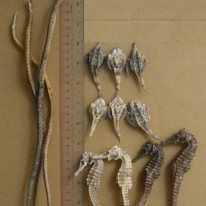 dried seahorse is 100% sun dried, dry seafood