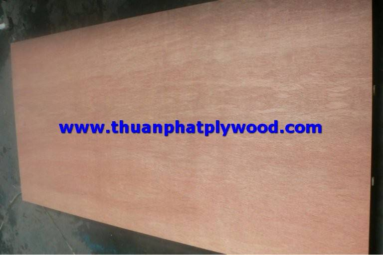 ECALYPTUS PLYWOOD