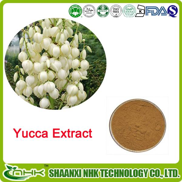 GMP Factory supply natural and pure yucca extract powder