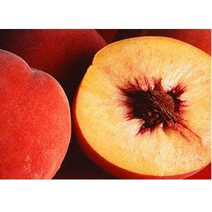 Peach Pulp