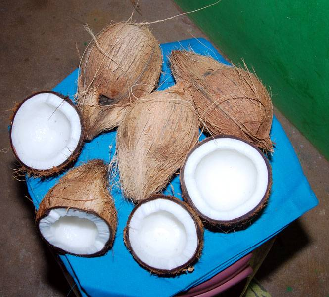 Coconut Mature Peeled Fresh from farm