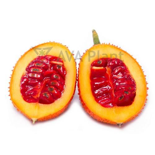 Gac fruit aril powder