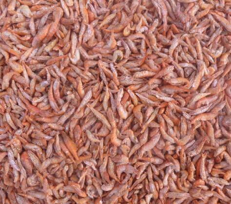 China best quality Freeze dried shrimp (Red)