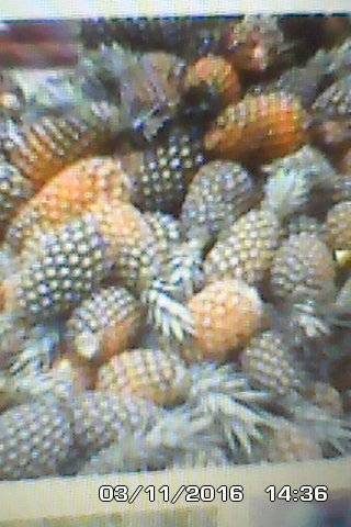 FRESH PINEAPPLES FROM BENIN