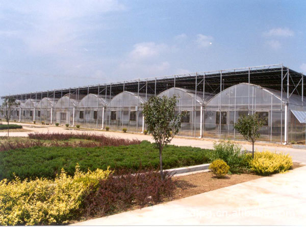 Clear Plastic Film Multi Span Agricultural Greenhouse for Planting
