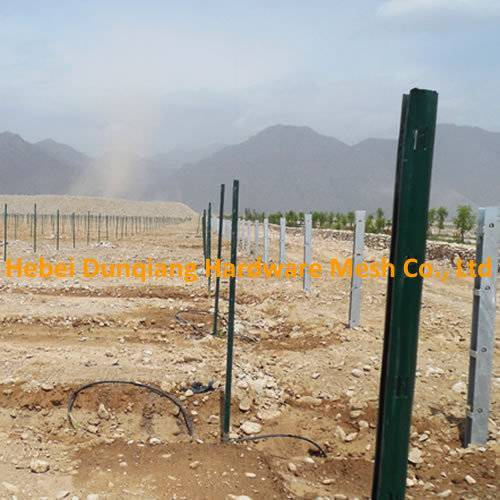 Metal Farm Post for Vineyard From China Supplier