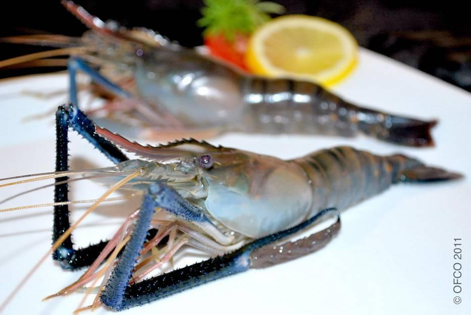 Shrimp (Black Tiger, Vannamei) Specialist - OFCO Inspection - Sourcing - Services