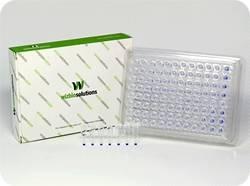 RT-PCR FDmix