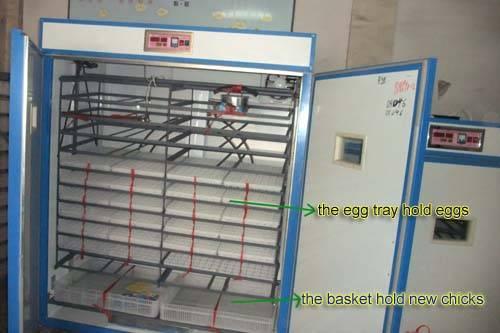 Hatching machine for  ostrich eggs