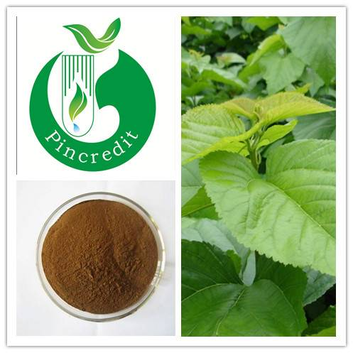Pure Mulberry Leaf Extract   3% flavone