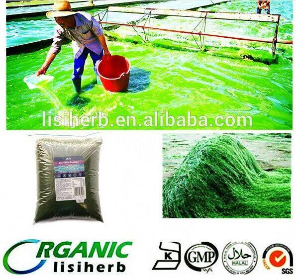 2015 sprilina season low price  organic Spirulina / Spirulina powder /spirulina table