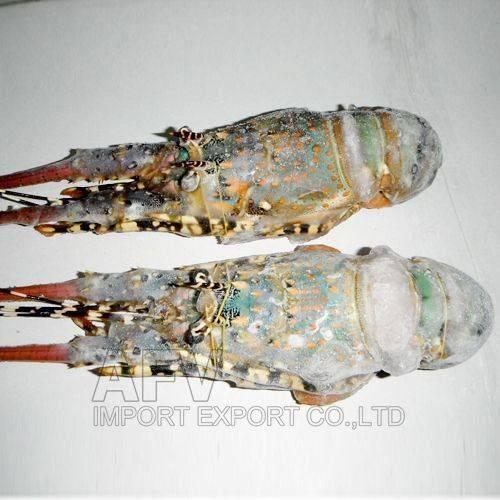 Frozen Lobster Viet Nam, AFV Import Export Company