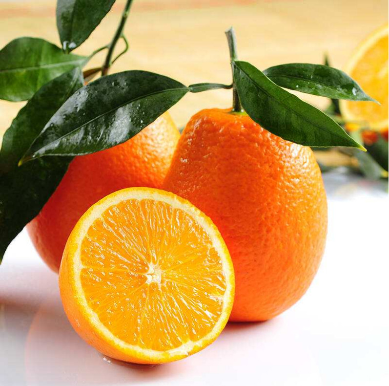 Fresh orange, Navel Orange in good price