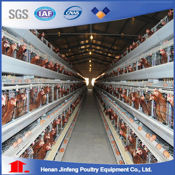 H Type Chicken Cage for Chicken Farm