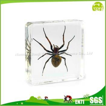 Benji Education equipment Real SpiderTeaching Embedded Specimen