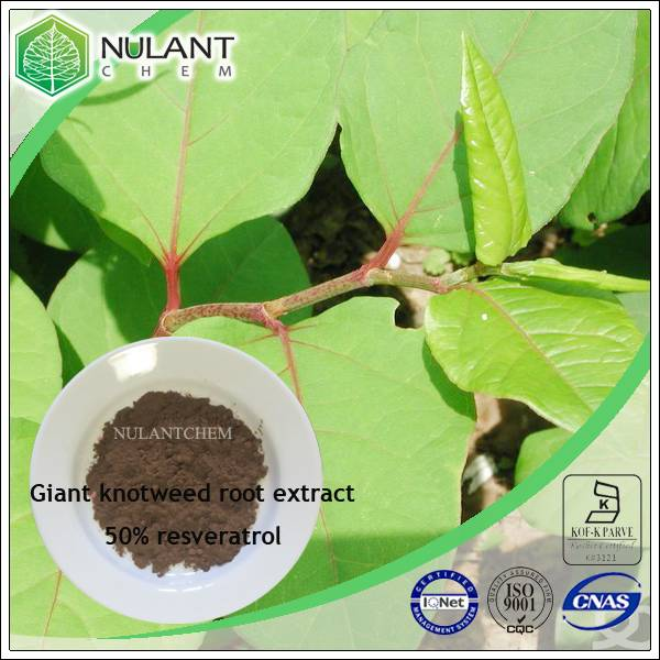Giant Knotweed extract resveratrol 50%