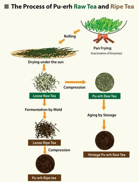 Buy Machines of processing tea (black tea and puer (pu-erh) tea -Kazakhstan and China-Yunnan(Dali)