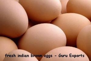 EXPORT OF INDIAN BROWN SHELL EGGS