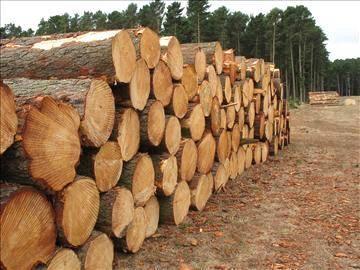 african hard wood