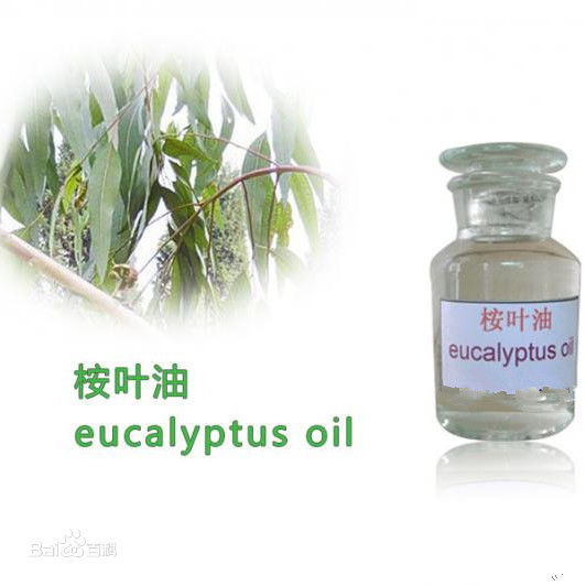 Natural Essential of Eucalyptus Oil