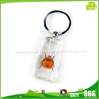 Hot Selling Individuality Real Insect Specimen Keychain Small Pendant