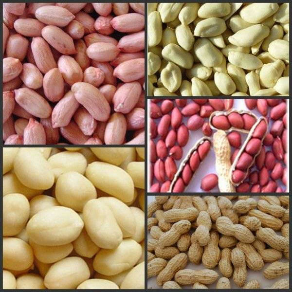 Supply the shandong peanut kernels, big size peanut kernels