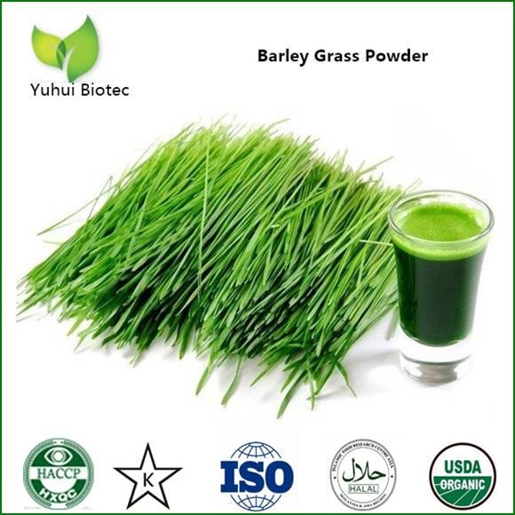 barley grass powder,organic barley grass powder