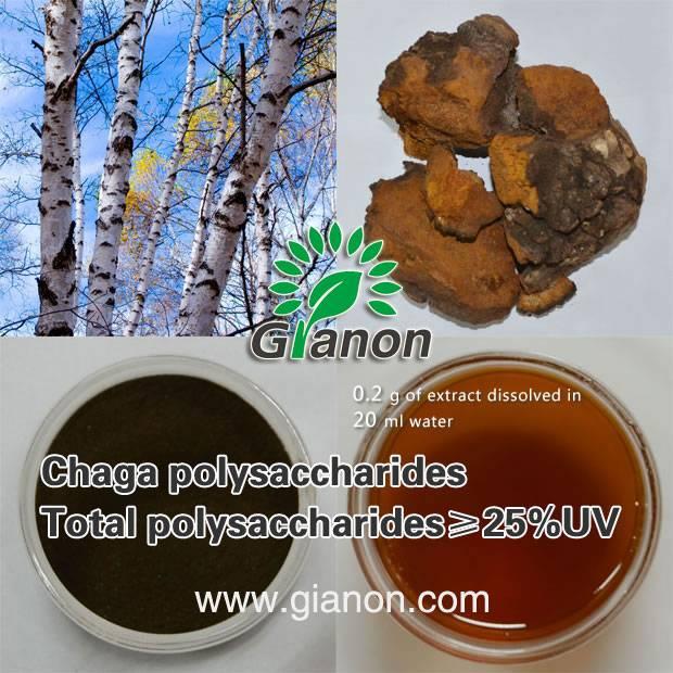 Chaga extract polysaccharides 15%UV
