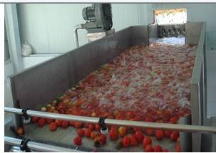 tomato sauce making line