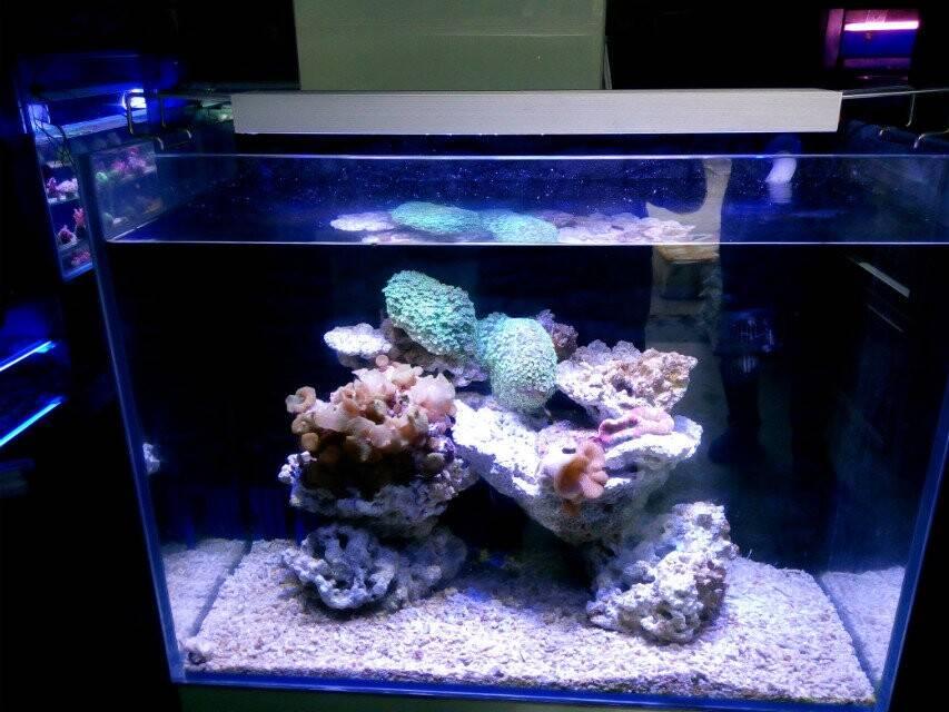 Wholesale chinese cheap marine aquarium led light for marine tanks