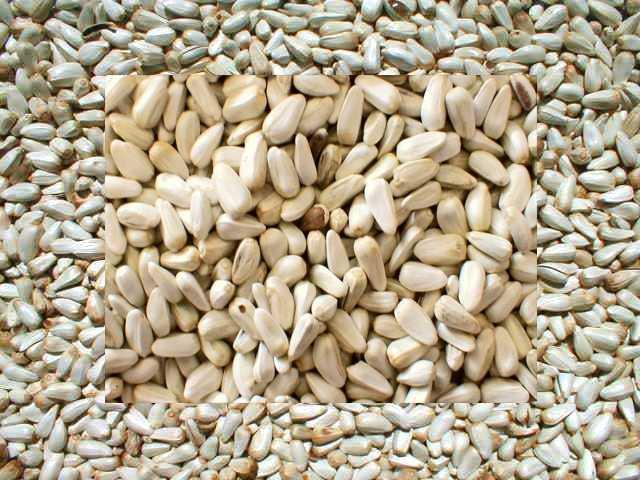 safflower seed