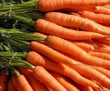 China Fresh carrots Farm organic carrot red carrot