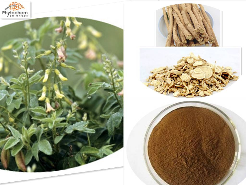 Herbal Astragalus Extract for Good Health