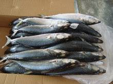Hot China Products Wholesale Frozen Fish Prices,Fish Food,Frozen Fish