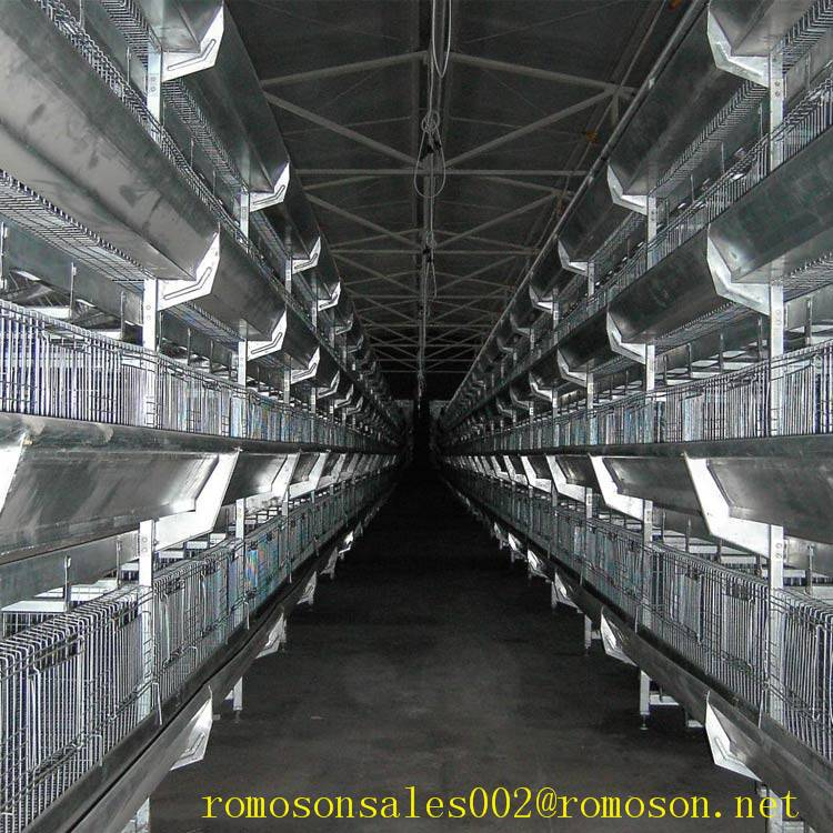 poultry farm design_shandong tobetter Experience