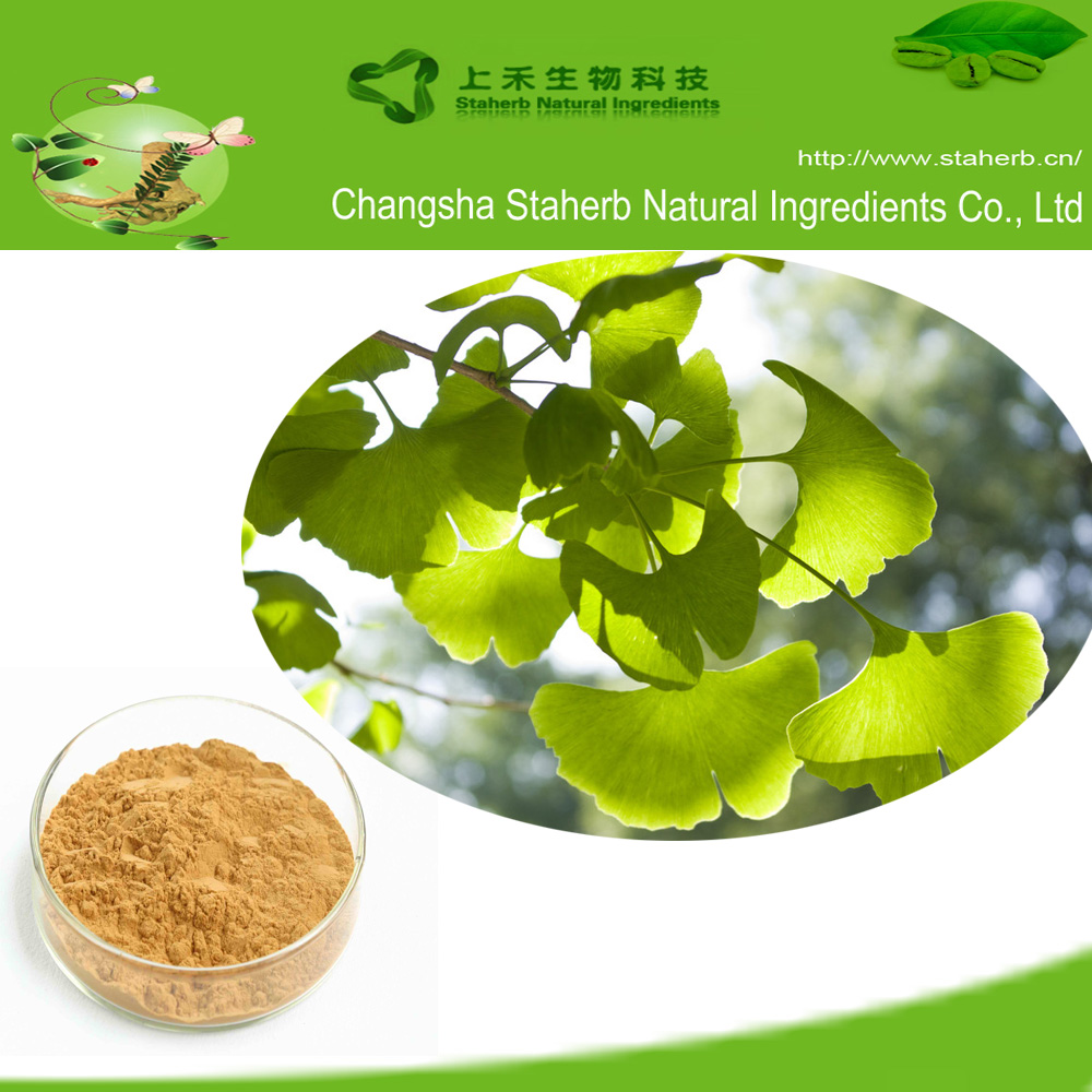 Ginkgo Leaf Extract ,EP,USP,CP