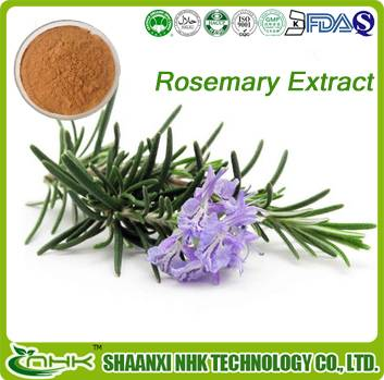 100% natural high quality Rosemary Extract Powder