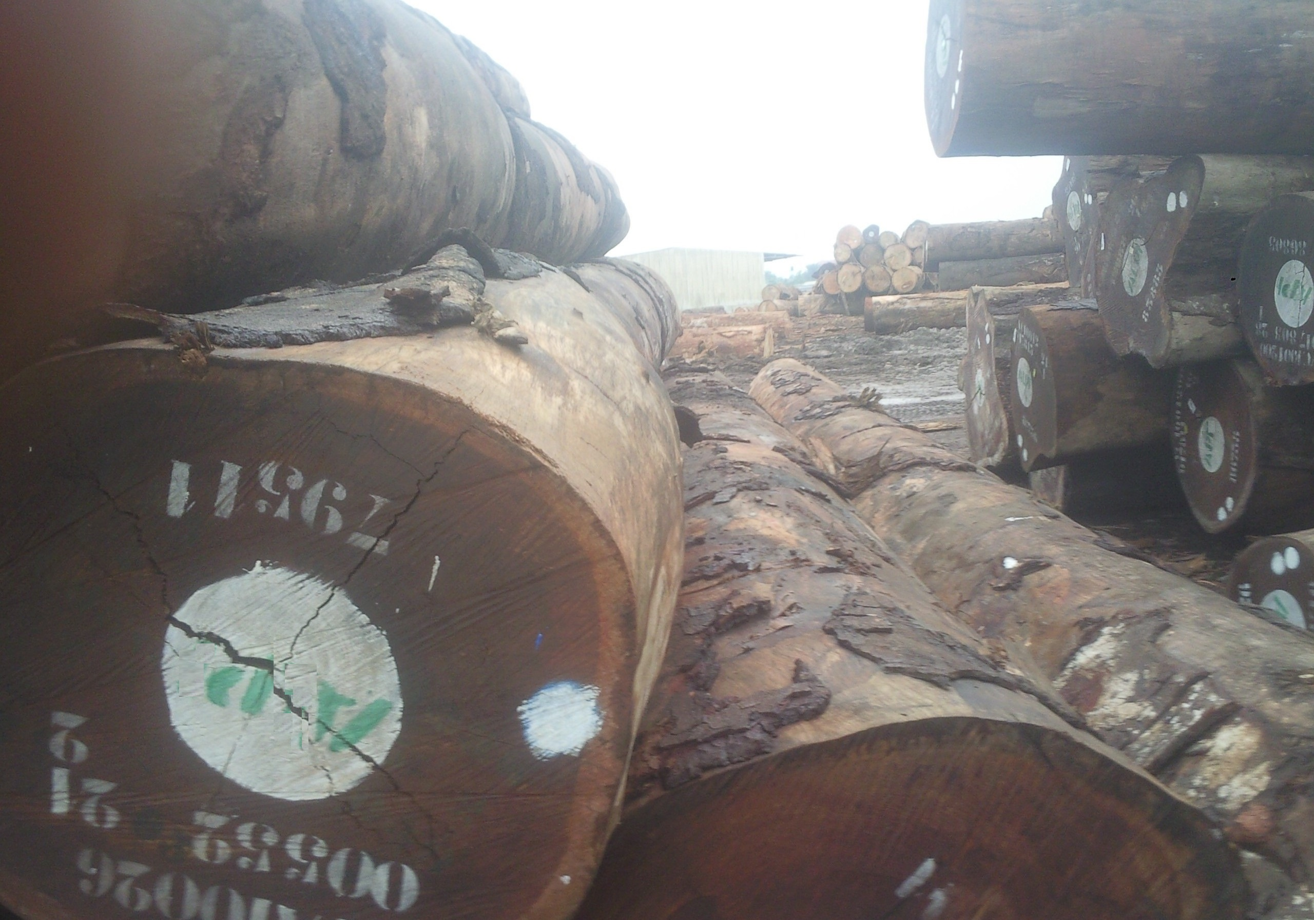 Tali and kosso wood logs