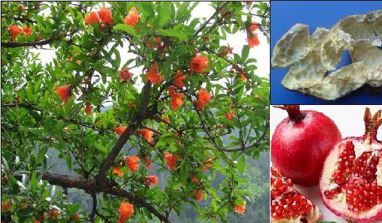 Pomegranate Extract: Ellagic Acid
