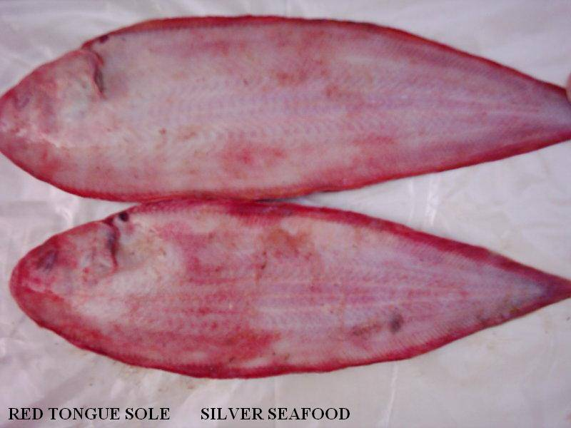 RED TONGUE SOLE (WHOLE ROUND)