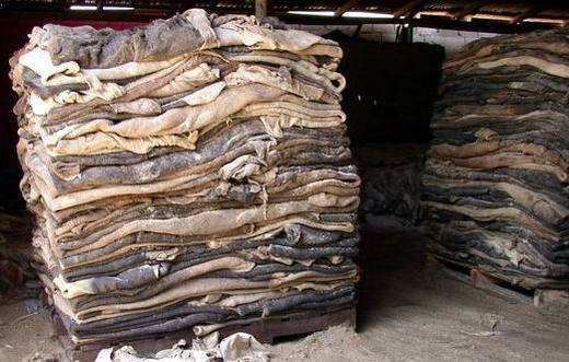 Wet/Dry Salted Donkey Hides and Skin