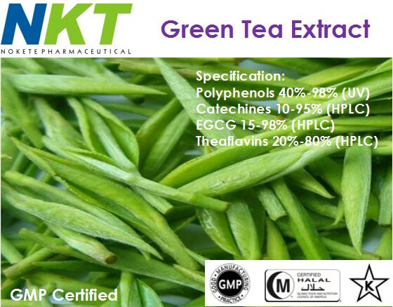 Green Tea Extract (GMP Certified)