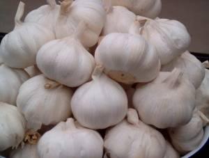 new pure white garlic