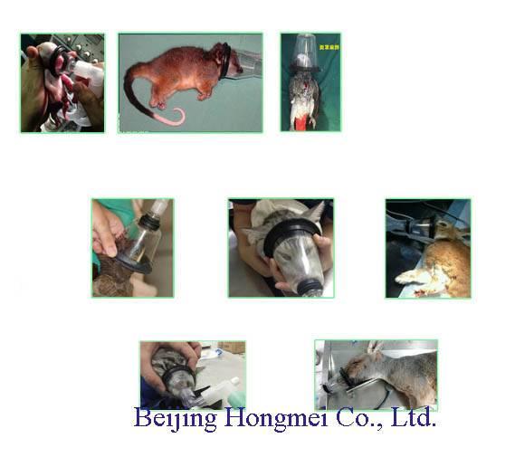 Veterinary Masks Rats, Cats, Dogs, Rabbits, Pigs, Monkeys
