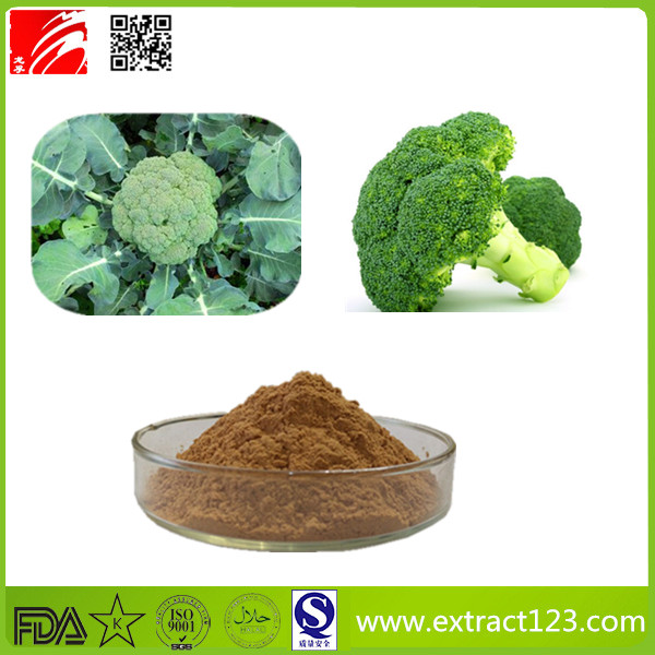 High Quality Broccoli Extract