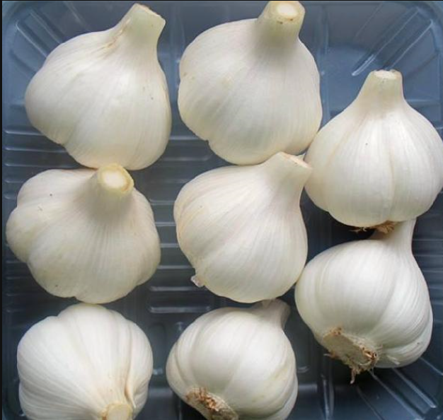 The Chinese supplier of fresh garlic