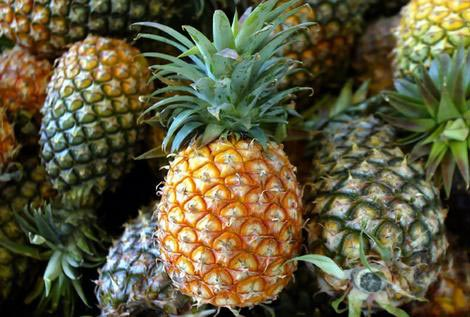 Pineapple-High quality and Best price