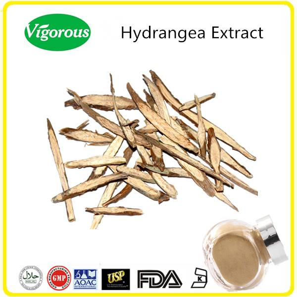GMP manufacturer hydrangea extract//hydrangea root extract