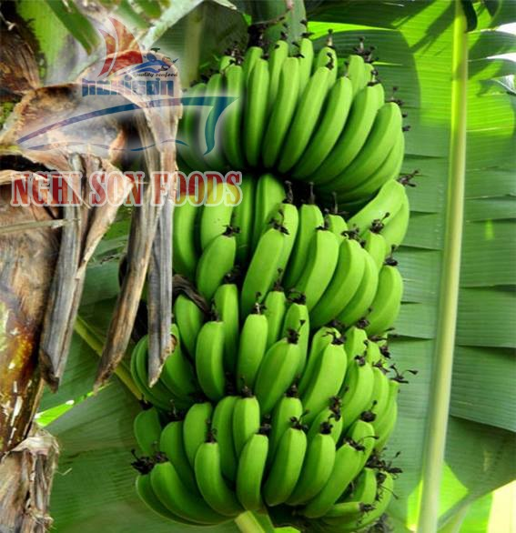Best Price For Cavendish Bananas