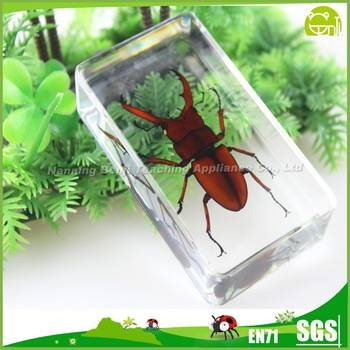 Benji Teaching Specimen Fortune Stag Beetle Resin Insect Block